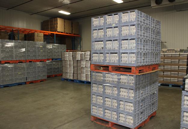 L'entreprise de classement d'œufs de consommation de Saint-Hyacinthe Nutri-Œuf fera acheminer un million de douzaines d'œufs vers des personnes dans le besoin grâce à un partenariat avec Banques alimentaires Canada et Second Harvest. Crédit : Archives/TCN