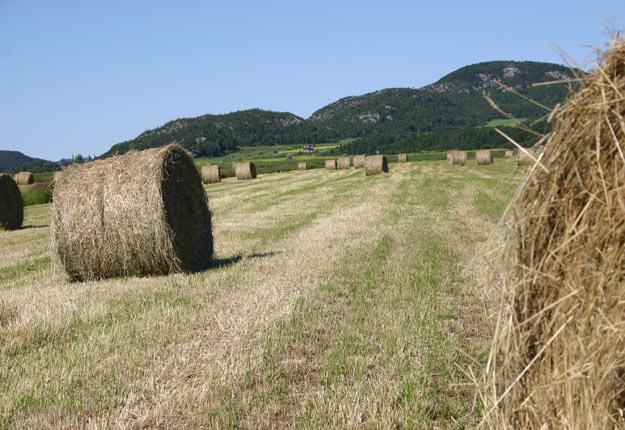 Depuis le début de la saison, la Financière agricole a enregistré 2488 avis de dommage causés par la sécheresse contre 209 pour le même motif à pareille date l'an dernier. Crédit : Archives / TCN