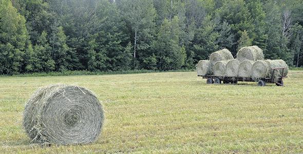 Pierre Giguère traite ses champs aux petits oignons, gardant toujours en tête qu'un sol, c'est comme un compte de banque: «Tu ne peux pas toujours en retirer. Des fois, il faut que tu  en remettes un peu de temps en temps »