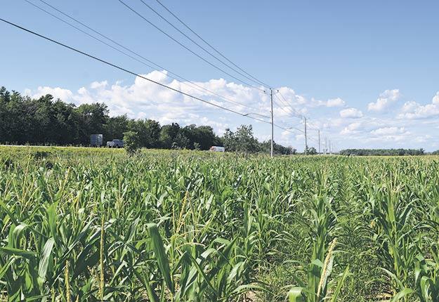 En 2017, la CPTAQ a refusé la demande de dézonage en évoquant la qualité des sols de ce milieu « aussi bons que tous ceux que l'on retrouve dans cette région ». Photo : David Riendeau/TCN