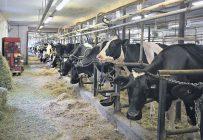 Le confinement a bouleversé la façon dont la population consomme les produits laitiers. Photo : David Riendeau/TCN