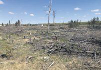 L'entente a établi un protocole pour permettre le reboisement de terres abandonnées, sans mettre en péril le patrimoine agricole. Photo : Émélie Rivard-Boudreau/Archives TCN