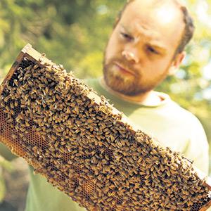 Raphaël Fort connaît une année exceptionnelle en 2020, récoltant environ 125 kilos de miel par ruche, alors que sa moyenne est normalement de 80 kilos. Photo : Gracieuseté des Miels des 3 Rivières