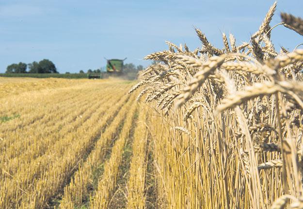 Les déficits hydriques et la mortalité hivernale ont privé plusieurs producteurs de grains d'une bonne récolte de céréales d'automne. Photo : Martin Ménard/Archives TCN
