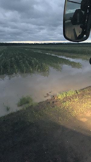 Les champs de Mikael Meunier ont été inondés par des pluies diluviennes, le 4 août à Saint-Jean-sur-Richelieu, en Montérégie. Photo : Gracieuseté de Mikael Meunier