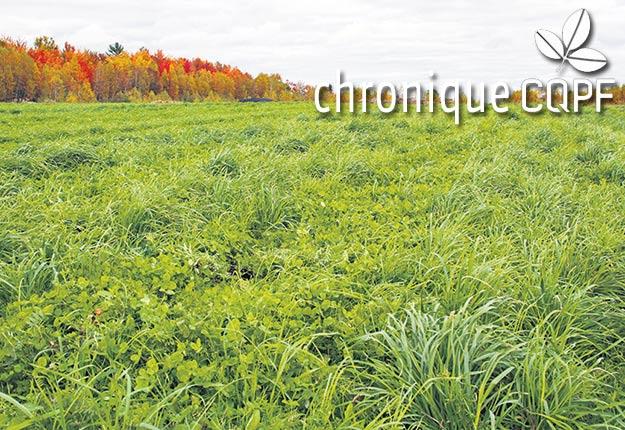 Quoi de mieux que les plantes fourragères pour maximiser la santé des sols? Avec elles, le sol s'organise tout naturellement de la surface vers la profondeur, ce qui lui permet de se régénérer. Photo : Archives / TCN
