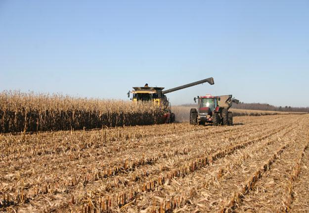 Selon les estimations de Statistique Canada, le rendement moyen du maïs-grain sera de 10,2 t/ha cette année. Crédit : Archives/TCN