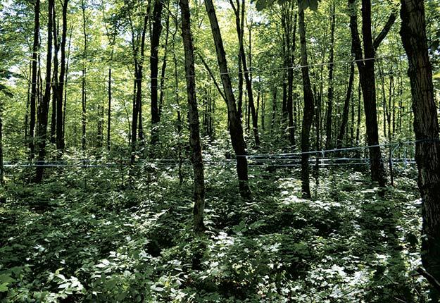 Une forêt inéquienne comprend beaucoup plus de petits arbres que de gros. Photo : Johanne Martin