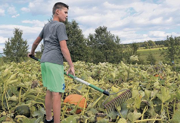 Éthan « le Citrouilleur » Vachon, 11 ans, a vendu ses premières courgettes sur Facebook cet été. Photo : David Riendeau / TCN