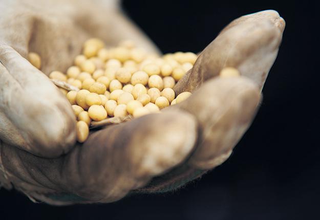 Les membres de l'Association canadienne des producteurs de semences ont rejeté à hauteur de 55 % la proposition qui allait permettre la création de Semences Canada. Photo : Martin Ménard/Archives TCN