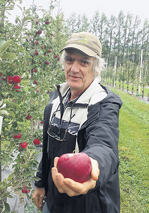 L'hybrideur Roland Joannin a créé la pomme Rosinette avec le collectif La Pomme de demain, établi dans les Basses-Laurentides. Photo : Gracieuseté de Roland Joannin