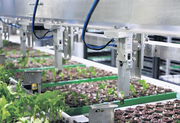 Pince de repiquage du robot repiqueur AutoStix® de Visser HortiSystems. Photo : Gracieuseté de Claude Vallée
