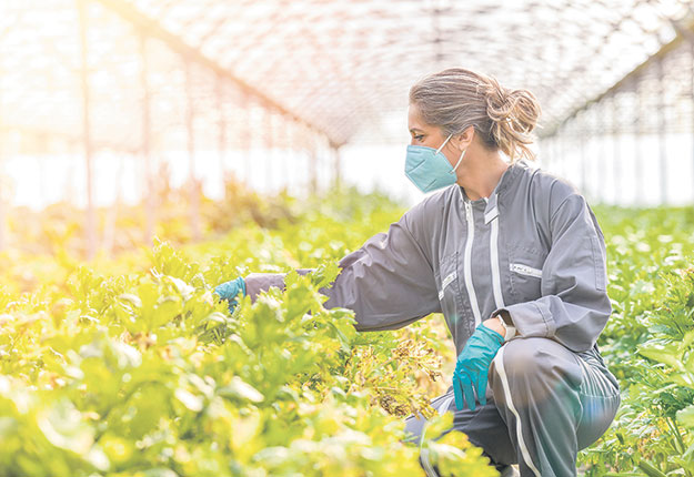 L'annonce a été accueillie prudemment par les Agricultrices du Québec. Photo : Shutterstock.com