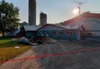 L'écoulement d'un silo a entraîné la mort d'une trentaine d'animaux. Crédit photo : Gracieuseté