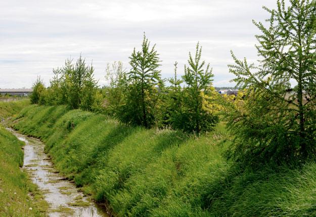 Les bandes riveraines permettent de réduire le lessivage des pesticides dans les cours d'eau. Crédit : Archives/TCN