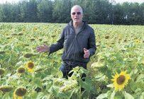 À 68 ans, Daniel Dubé a décidé de confier la culture de ses tournesols biologiques à un exploitant pour se consacrer totalement à la production et à la transformation de son huile oléique et de sa farine de pois jaunes. Photo : Denis Méthot