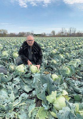 Un épisode de grêle survenu le 10 octobre a endommagé les récoltes de choux de Jocelyn Dugas, qui allaient pourtant bien jusqu'ici. Photo : Gracieuseté de la Ferme Lise Charbonneau