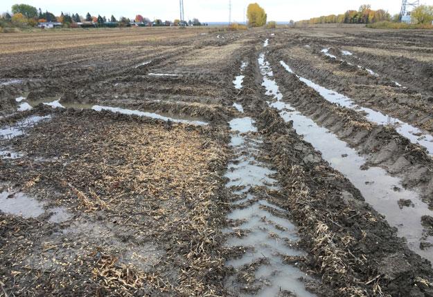 Le temps pluvieux crée de mauvaises conditions de récolte. Prendre la décision de récolter quand même, c'est aussi prendre la décision de compacter son sol. Photo : Martin Ménard/TCN