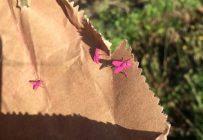 S'il remporte le prix de 100 000$, le Consortium Prisme souhaite agrandir son usine de production de mouches roses à Sherrington en Montérégie. Photo: Gracieuseté de Prisme