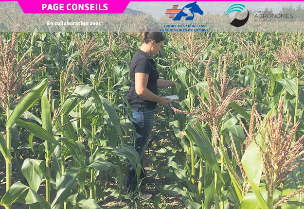 L'agronome Catherine Thireau a signé un texte sur le dépistage des ravageurs le 4 octobre 2017. Photo : Gracieuseté de l'OAQ