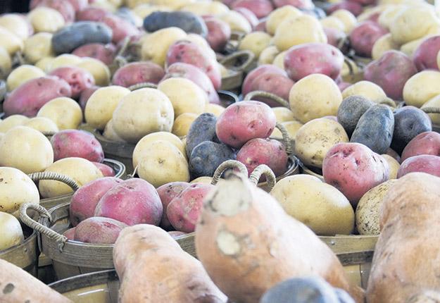 Entre 75 et 80 fermes de pommes de terre sont visées par un nouveau règlement qui obligera les producteurs à filtrer leurs eaux, après le lavage de légumes, pour qu'elles atteignent une concentration de 50 mg de ppm/L. Photo : Archives / TCN