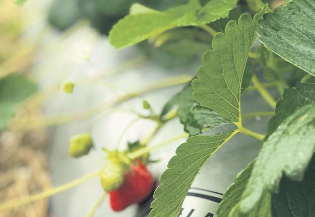 L'entreprise de Laval commercialise ses paillis biodégradables à travers le pays et dans 35 États américains. Photo : Gracieuseté de FilmOrganic