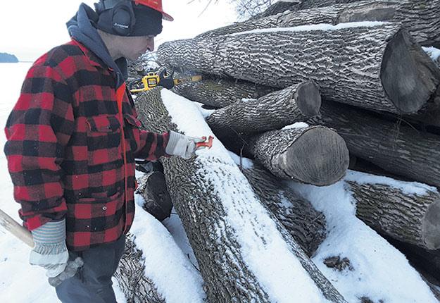 Les producteurs de bois de la forêt privée devraient pouvoir compter sur des incitatifs fiscaux plus simples et bonifiés afin de réaliser leurs travaux. Photo : Martin Ménard/Archives TCN