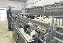 Après plusieurs mois de ventes à perte, plusieurs éleveurs de veaux de lait, dont Pierre-Luc Nadeau, songent à délaisser cette production. Photo : Archives/TCN