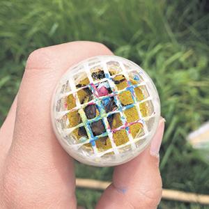 À des fins d'identification, les reines bourdons étaient marquées d'une combinaison de couleurs unique à l'aide d'un crayon à peinture non toxique.