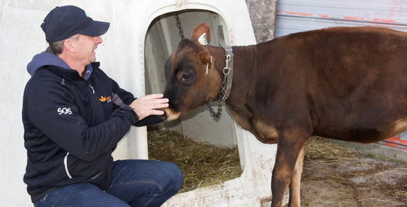 Hugo Beaudry se donne comme objectif d'élever de beaux animaux pour préserver les Canadiennes.