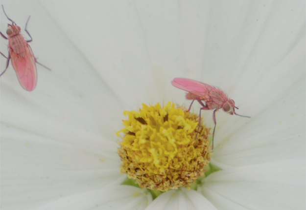 Le projet de la Mouche rose de Consortium Prisme a remporté dans la catégorie Développement durable.