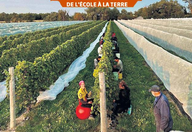 En plein essor au Québec, la production vinicole repose entre autres sur l'obtention de fruits de qualité au champ et sur une maîtrise des processus de fermentation. Photo : Gracieuseté du Domaine Vinéterra