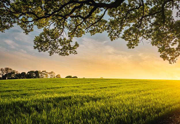 L'ITA soutient les personnes, les organisations et les entreprises dans le développement ou l'acquisition de nouvelles compétences, notamment dans le secteur agricole. Crédit photo : Écocert Canada.