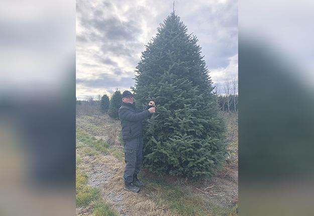 Benoit Labbé, qui a commencé en 1973 à planter des arbres de Noël, n'a jamais vu une pareille demande. On le voit ici avec un arbre de 3,5 m de hauteur valant 200 $ sur le marché new-yorkais. Photo : Gracieuseté de Benoit Labbé