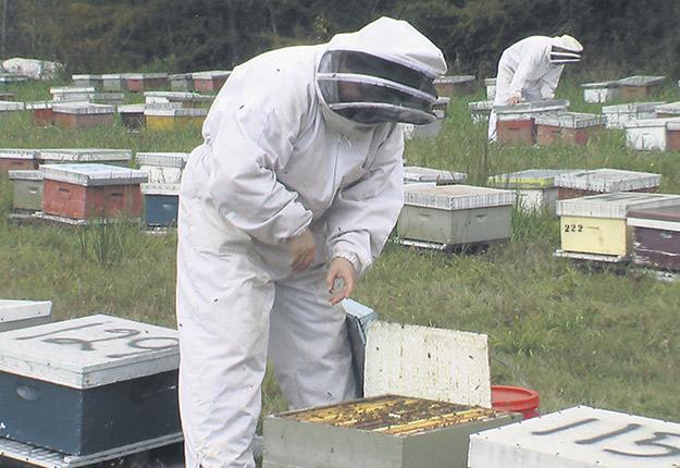 Le nouveau plan stratégique de la Table filière apicole du Québec cible les actions à prendre pour améliorer la survie desabeilles. Photo : Archives / TCN