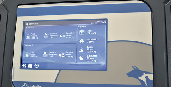 L'interface du boîtier connecté d'Intelia permet de suivre d'un coup d'œil la croissance de la volaille.