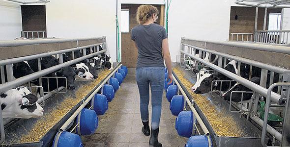 L'intégration de la paille à l'alimentation de tous leurs veaux sur la plus grande période de temps possible favorise le développement du rumen et réduit les ballonnements.