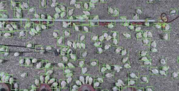 L'outil Copeeks allie l'analyse d'images et la collecte de données pour renseigner l'éleveur sur l'état sanitaire de la volaille.