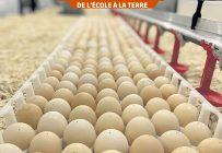Les œufs en fin d'incubation, soit au jour 18, sont transférés directement au poulailler afin de permettre au poussin d'éclore dans un environnement idéal. Photo : Gracieuseté de Julianne Guillemette, Sam Lépine et Mathieu Desjardins.