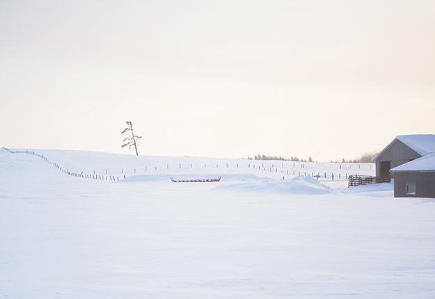 Le grand territoire de l'Abitibi-Témiscamingue est propice à l'agriculture biologique en raison de sa faible pression de ravageurs. Photo : Martin Ménard/ Archives TCN