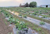 Au Témiscamingue, la ferme Chez Lyne et Sylvain fait partie des nouvelles productions maraîchères qui ont démarré ces dernières années. Photo : Gracieusetéde la ferme Chez Lyne et Sylvain