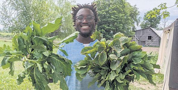 Edem Amegbo, propriétaire de la ferme bio Au Jardin d'Edem, à Farnham en Montérégie, consacre une part de ses cultures aux légumes africains depuis six ans. Photo : Gracieuseté d'Au jardin d'Edem