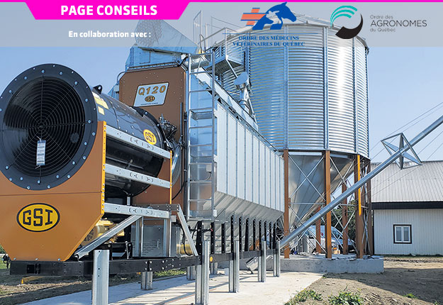 Plus la température de séchage est basse, plus le grain aura un poids à l'hectolitre élevé et unpourcentage de grains cassés plus faible. Photo : Jules St-Pierre