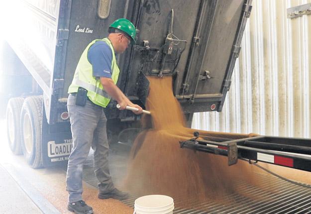 Le nouveau traité de libre-échange n'a aucune incidence sur les consommateurs canadiens, souligne la CCG. Tout le grain cultivé aux États-Unis, livré au Canada, doit satisfaire aux mêmes normes de qualité rigoureuses que le grain canadien. Sur la photo, un inspecteur de la CCG évalue un chargement de grains dans un des silos terminaux. Photo : Gracieuseté de la CCG