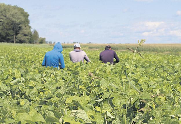 Les producteurs agricoles ne savent plus sur quel pied danser pour héberger leurs travailleurs étrangers. Photo : Caroline Morneau/Archives TCN