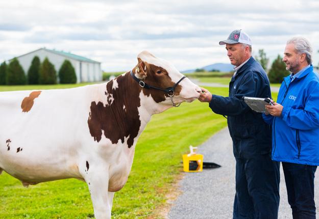 Il n'y aura plus d'étables à taureaux pour la production de semences à Sainte-Madeleine à compter du 31 août. Photo : Martin Ménard/Archives TCN