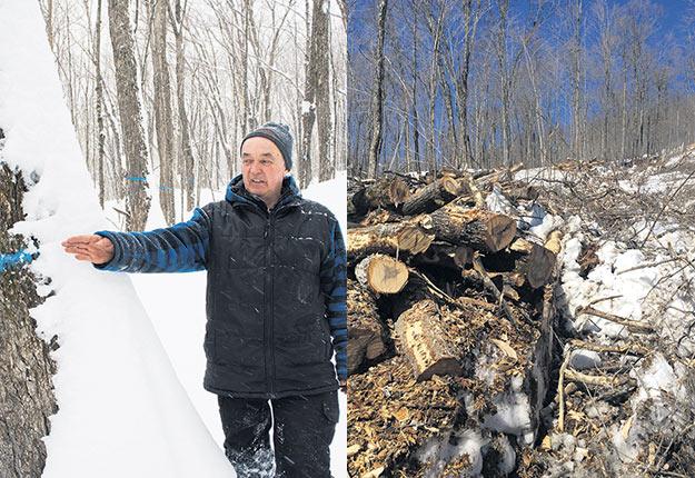 La photo de gauche d'Alain Gauthier a été prise il y a un an lors d'une visite de La Terre dans Portneuf. Celle de droite montre l'état de la même érablière en terres publiques qui a subi depuis une coupe partielle. Photos : Alain Gauthier