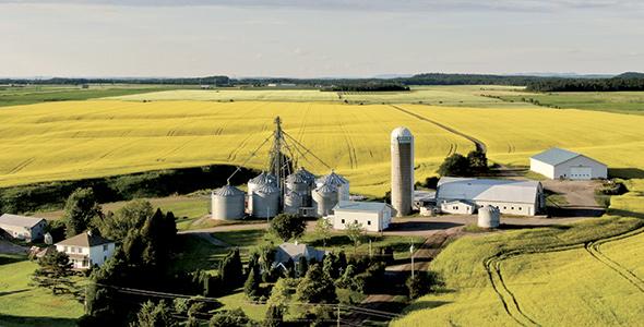 Les installations de l'exploitation comprennent une dizaine de silos, deux élévateurs à grains et un séchoir. Photo : Gracieuseté de la Ferme Van Tassel