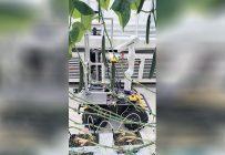 Présentement, les bras robotisés de Kinova sont testés sur des plateformes mobiles des entreprises SYHA (en France) et Ecoation (en Colombie-Britannique) ainsi qu'au centre de recherche Vineland Research and Innovation Centre (en Ontario). Photo : Gracieuseté du Vineland Research and Innovation Centre