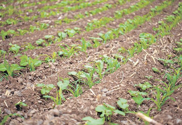 L'utilité principale de semer des intercalaires est d'augmenter la quantité de racines dans le sol.